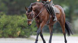 Pferd in Dehnung Lisa Rädlein